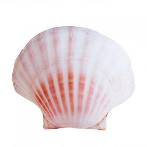 shell_pillow